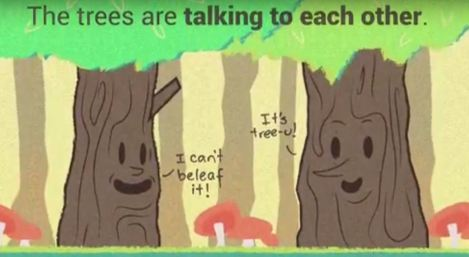 trees-talking-to-each-other_Knipsel